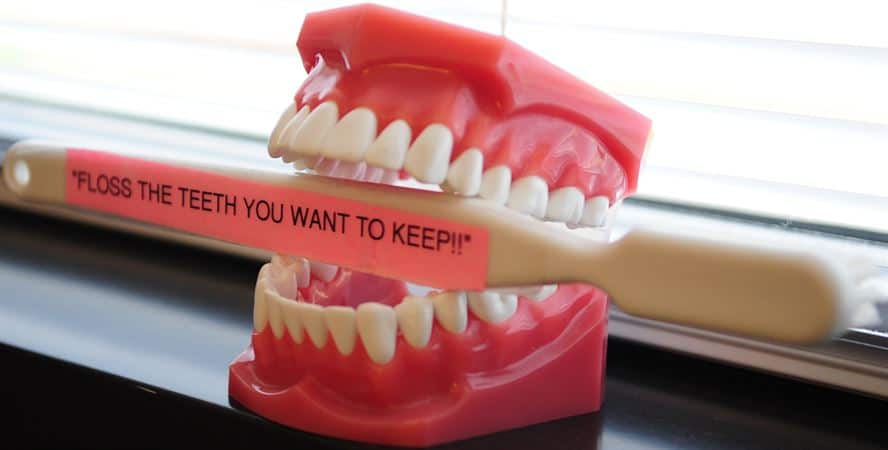 teeth holding a toothbrush